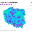 Sześć milionów cyberataków na Polskę w ciągu roku